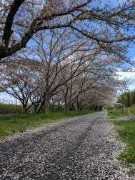 曽我梅林梅と桜 今日の散歩