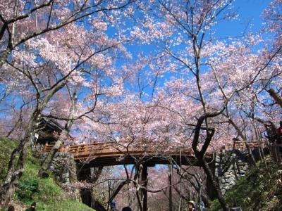 '19 信州 桜&城めぐり5 日本三大桜の名所 5分咲きの高遠城跡さんぽ