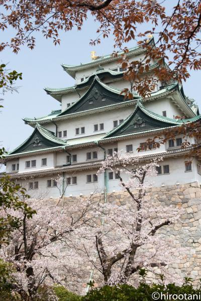 2019年 東海の桜めぐり 【9】名古屋城の桜