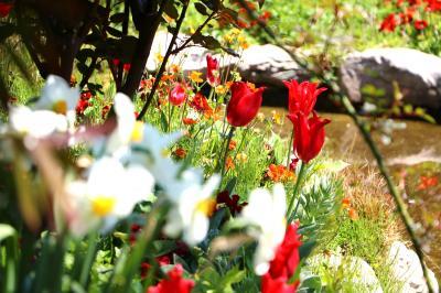 横浜イングリッシュガーデン、春の彩り・・・