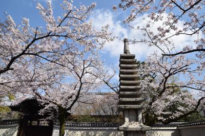 ひとりお花見部 今出川北エリア路地塗りつぶしで桜探しに花御堂 と 南座都をどり 二日め前半篇