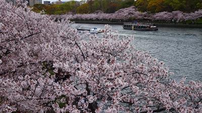 久し振りの・・・大阪造幣局桜の通り抜け その8完。