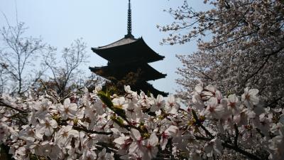 2019年4月散歩 京都の桜