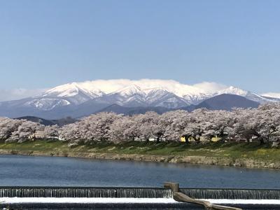 船岡駅から白石川堤 一目千本桜