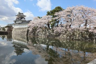 北陸8名城のさくら(3)・・富山城址公園と高岡古城公園を訪ねます。