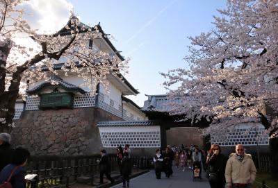 北陸8名城のさくら(4)・・加賀百万石の舞台、金沢城公園を訪ねます。