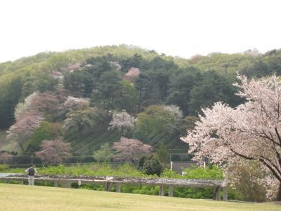 桜と世界遺産と蕎麦