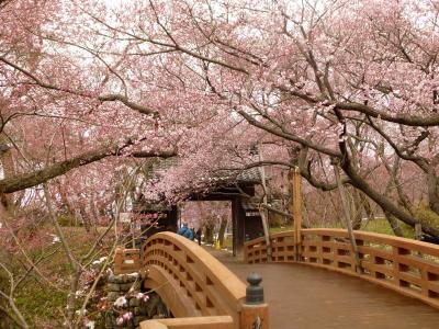 高遠城址公園・・桜、桜♪