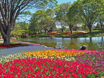 心躍るチューリップガーデン 昭和記念公園2019春
