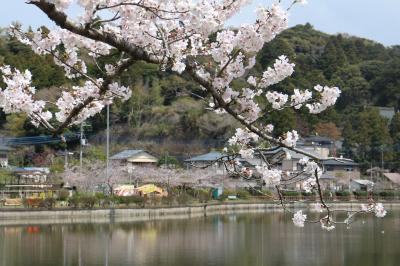 バスと徒歩で、東金山武桜詣。すでに盛りは過ぎていたが、桜と古寺の風情に触れる。