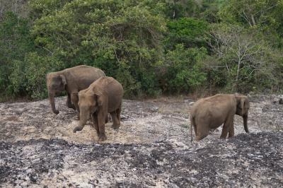 2019年ゴールデンウィーク スリランカの旅①~ネゴンボ,タンブラ石窟、ミンネリア~