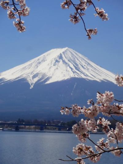 平成最後のーー満開の桜と富士と湖とーーー。