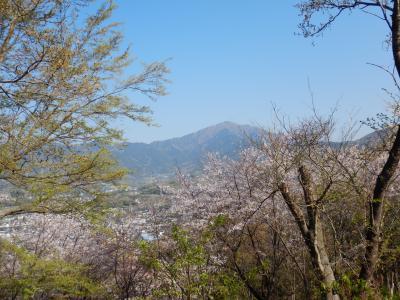神奈川散歩 ~2019年4月 弘法山から大山へ~