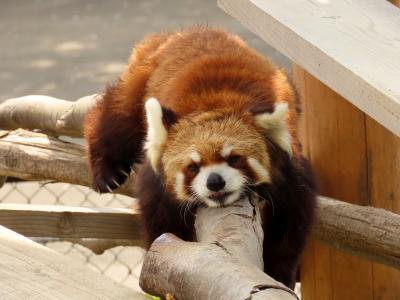 日立市かみね動物園 1年1ヶ月ぶりの神峰・・・気になるヤマト君とゆいちゃんの今冬の恋模様は確認できず・・・