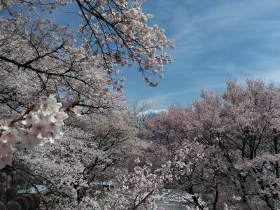 「伊那・駒ヶ根」満開、絶景の高遠城址公園と六道の堤と伊那公園と春日公園の桜と、中沢の花桃