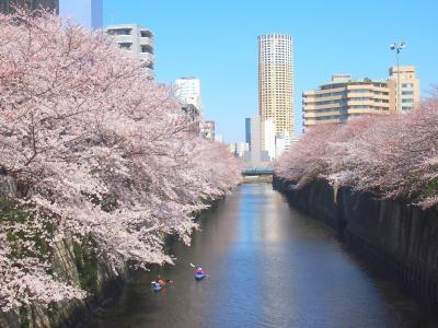 目黒川の桜を見に青春18きっぷを利用して行ってきました