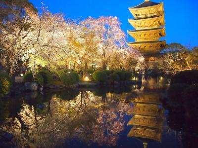 青春18きっぷの旅 2019年春 平成最後の桜を求めて[1] ~京都、東寺の桜~