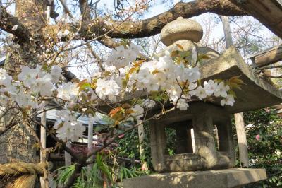 2019春の京都 桜を静かに愛でる穴場旅/後半