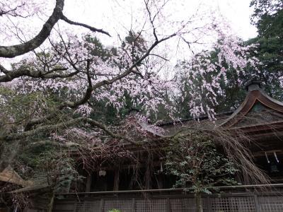 2019春の吉野その1~咲き始めの奥千本と満開の上千本