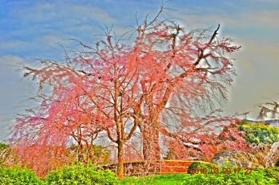2019春 『そうだ!京都、行こう!』 八坂神社~祇園枝垂れ桜~夜の先斗町と鴨川 《1日目-3》