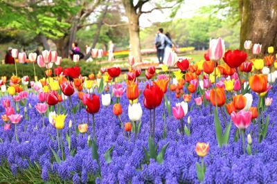10日違えば別世界、昭和記念公園・・・