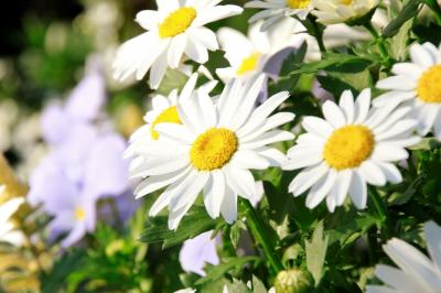 春のヨコハマ山手で花さんぽ