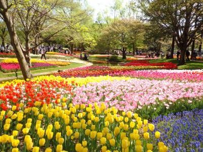 チューリップガーデンが素敵すぎる♪昭和記念公園 フラワーフェスティバル2019