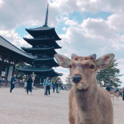 春の奈良公園へ☆鹿かわいい!