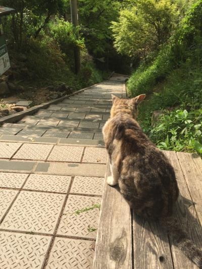 神戸の高取山に行ってきた