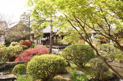 奈良公園からならまち界隈 色々と散策
