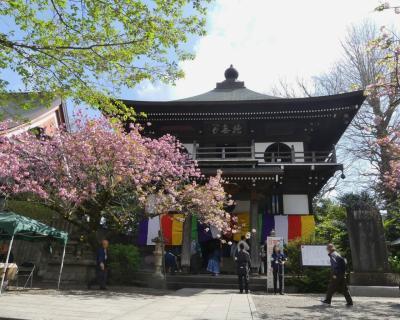 長禅寺・三世堂(取手のさざえ堂)_2019_1年に1度だけ公開されます。(茨城県・取手市)