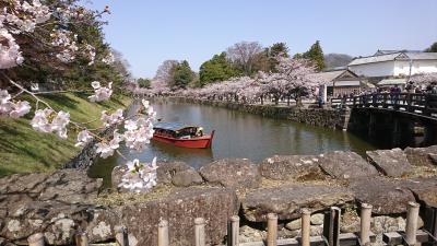 春休みだよ☆フェリーで桜満開の彦根へ