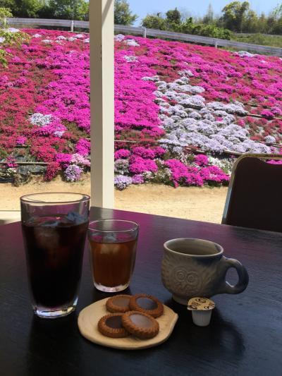 広島☆ふくろうの花畑で芝桜鑑賞