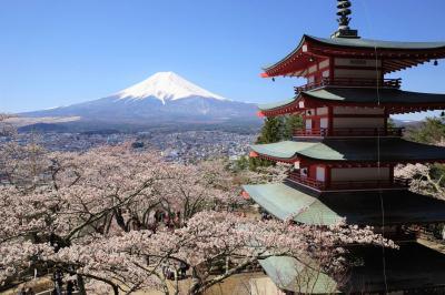 新倉山浅間公園~三ッ峠山登山 満開の桜と富士山と五重塔
