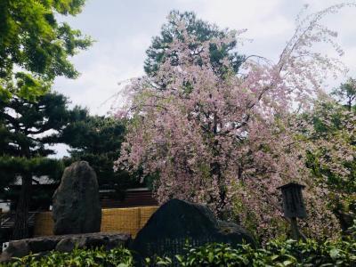 そうだ!京都に行こう。朝、思いたって京都行って来ました。
