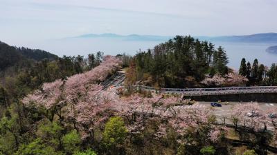 琵琶湖 つづら尾崎 岸に沿って桜が3000本! お花見ドライブ 2019  日本の岬・80箇所