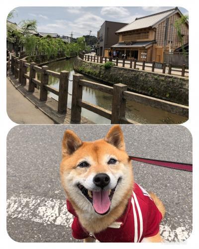 ワンコとお出かけ♪香取神宮と北総の小江戸・佐原を散策!