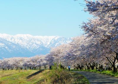 平成31年4月 新潟・新発田周辺の桜を追う!(1/2)