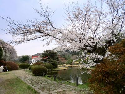 小石川植物園の花見