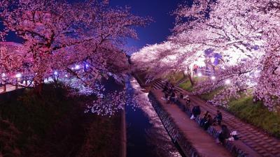 奈良桜散策