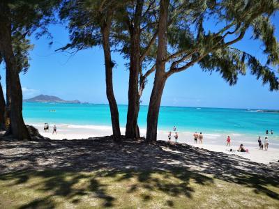 恒例のハワイ旅行③