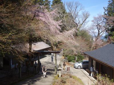 奥千本は桜が満開でした。金峯神社の周辺はとてもきれいでした。