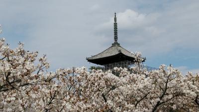 春爛漫!!日本縦断大満喫の旅6日間①