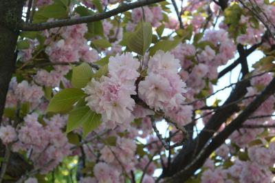 春の東京をぶらぶら 4月