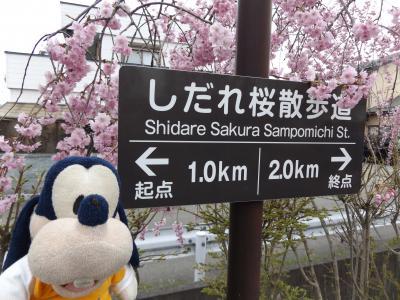 グーちゃん、喜多方へ平成最後の花見に行く!(日中線しだれ桜に感動!編)