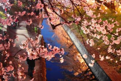 大和高田川の夜桜見物(千本桜)