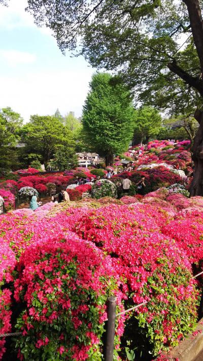 赤坂のロウリーズでランチ&根津神社で満開のつつじを堪能♪