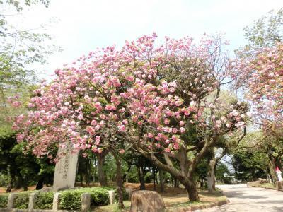 東京文学・歴史散歩26。北区王子界隈その2:音無親水公園、飛鳥山公園/紙の博物館。