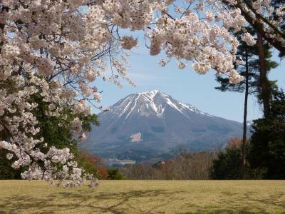 桜さくら 米子城址&とっとり花回廊