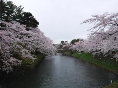 弘前公園で桜を楽しむ